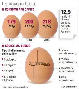 infografica_etichetta_UOVO